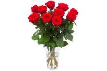 Roos Red Naomi Small (10 stuks)(Roos Red Naomi Small (10 stuks))